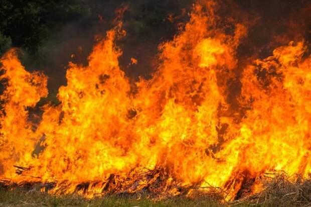 В Сирии казнили 24 человека, обвиненных в искусственном поджоге лесов