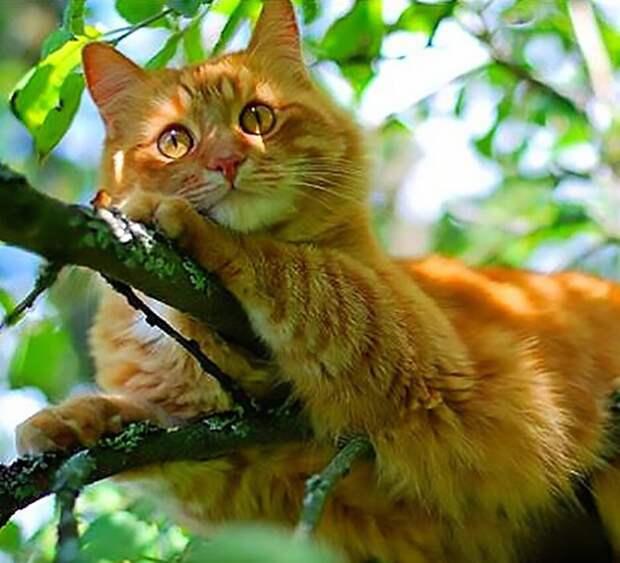 Смешные коты, которые поднимают настроение #152
