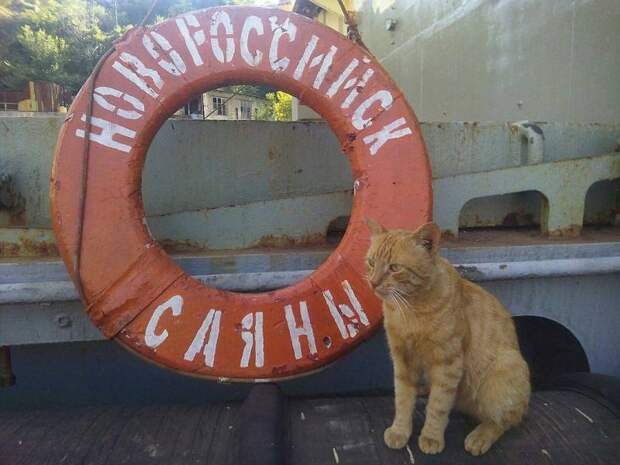 Кот Боцман из Севастополя забежал на другой корабль и полгода отдыхал в Сирии