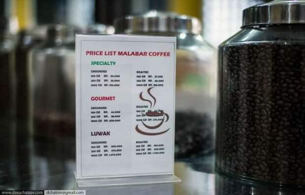 Как делают самый дорогой кофе в мире