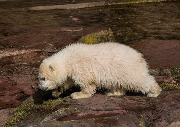 В семье переехавшего из Ижевска в ростовский зоопарк медведя Айона появился медвежонок