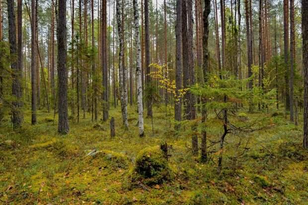 Красоты России (#524)