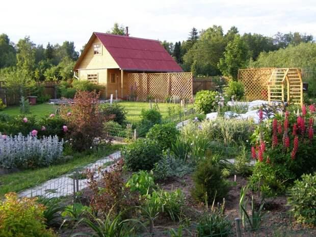 Что посадить полезного на даче, не требующего особого ухода дача, еда, полезное, растения, своими руками, сделай сам