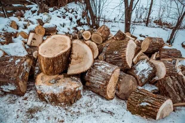 Объем незаконных рубок древесины сократился на 33% в Иркутской области
