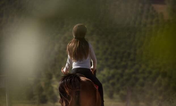 Организатора конных прогулок из Севастополя могут посадить в тюрьму