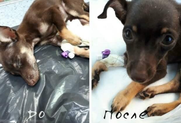 Жительница Ростова спасла щенка, выброшенного хозяевами прямо с медицинским катетером