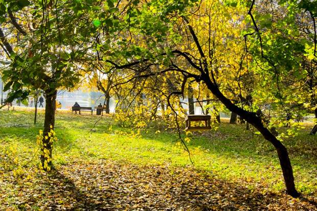 Осеннее (Наталия Саламатина)