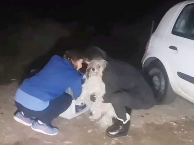 Волонтеры и собака