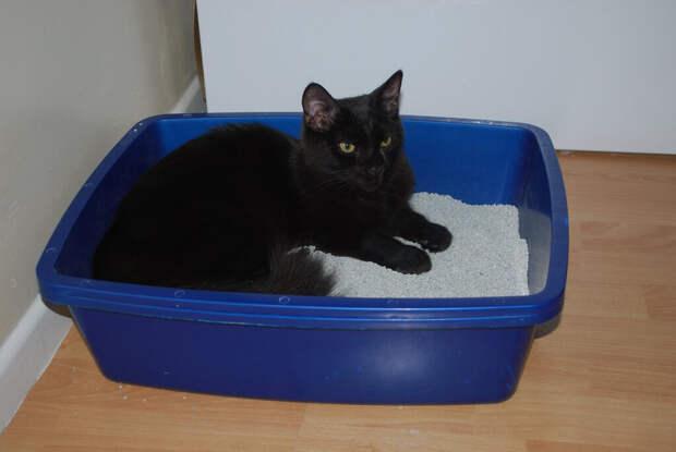 Обычно для этих целей кот выбирает запасной лоток( да да, у них есть и такие)))