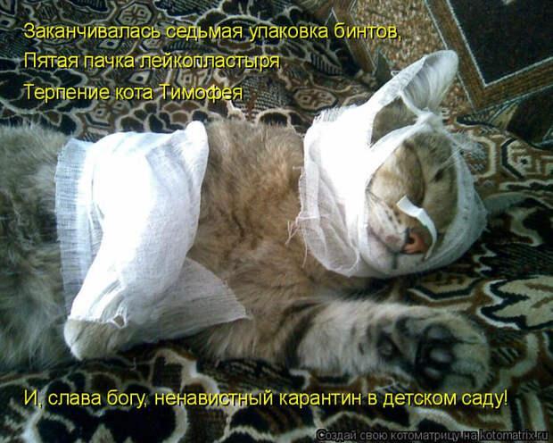 kotomatritsa_S (700x560, 464Kb)