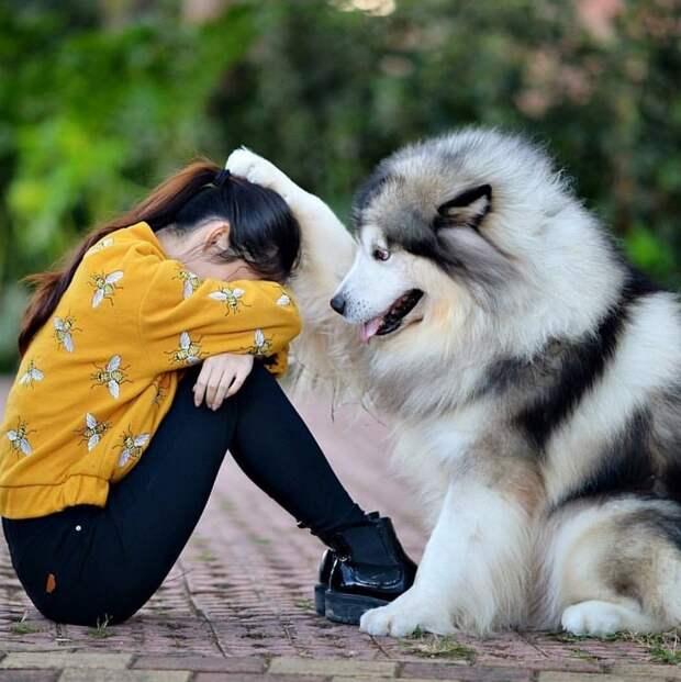 Эти 24 снимка объясняют почему именно собаки — лучшие друзья человека
