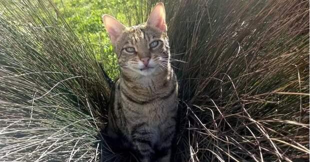 Непростая жизнь Мишки — единственной в мире кошки-уголовницы