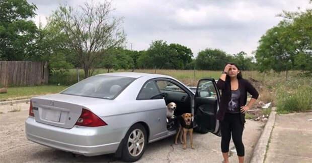 «Уходите, вы мне надоели!» В Техасе женщина решила избавиться от четырех собак…