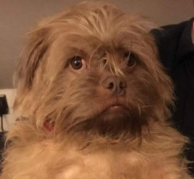 Пёс пугает хозяев своим человеческим лицом