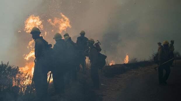 В США из-за лесных пожаров горит полтора миллиона гектаров земли