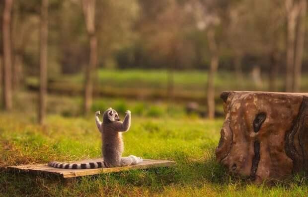 20 животных, которые занимаются йогой лучше, чем вы