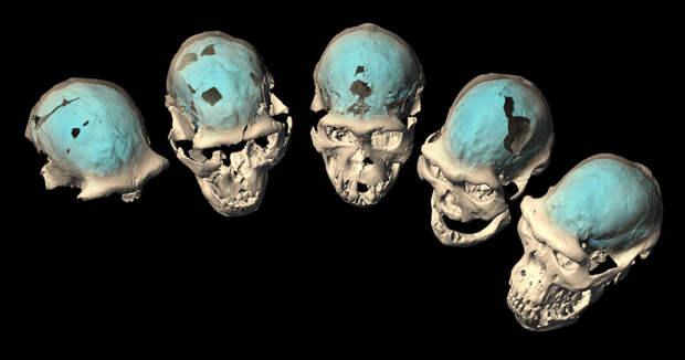 Ученые выяснили, когда у наших предков появился мозг современного человека