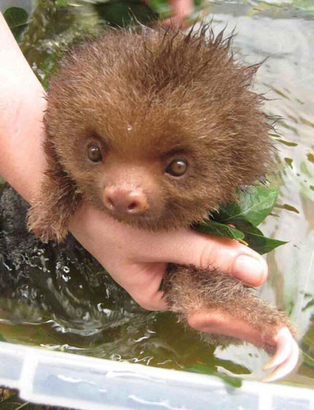 15 купающихся зверей, которые обязательно заставят вас улыбнуться