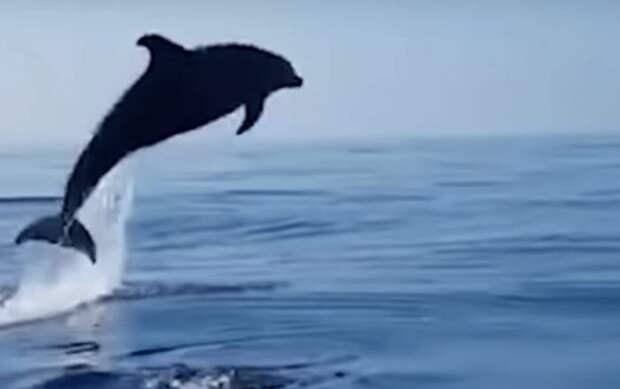 Самка дельфина отблагодарила рыбаков за спасение детеныша