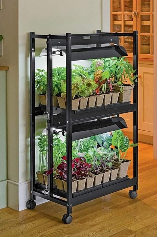 Мини-сад, который удачно расположился на двухярусах, что станет просто открытием и очень красивым решением для дома.