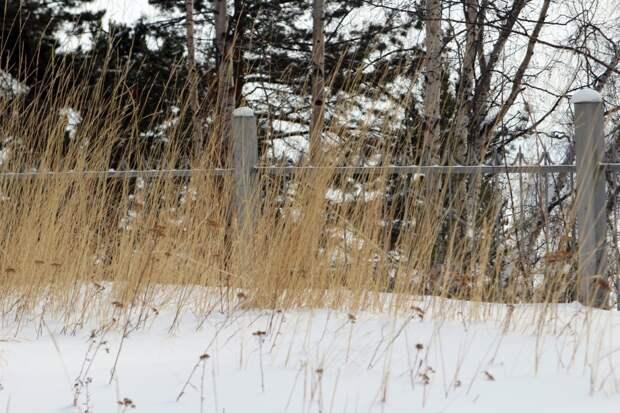 Сильный ветер, мокрый снег и гололед грозят Иркутской области 25 октября