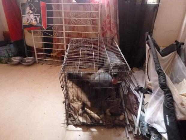 Собаки, спасенные из жутких условий, не могут перестать улыбаться история, история спасения, помощь животным, собаки, спасение животных