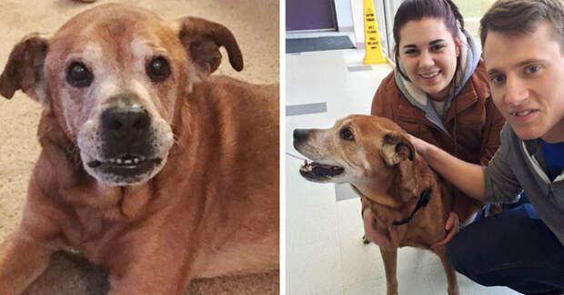 Пара, пришедшая в приют, чтобы сделать пожертвование, вернулась домой с 17-летней собакой Счастливый конец, животные, спасение