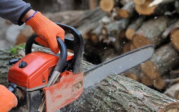 «Черный» лесоруб напилил на три миллиона рублей в Тверской области