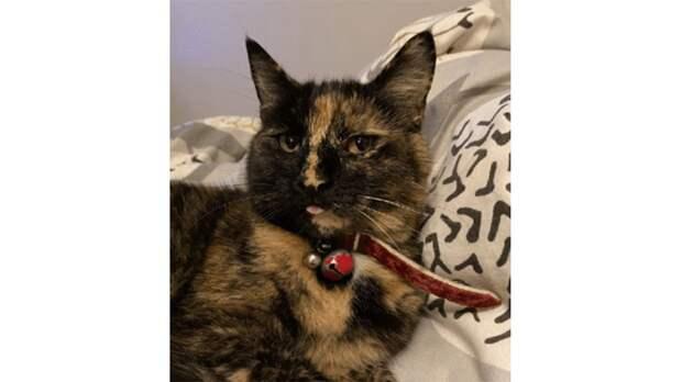 В Великобритании кошка ворует у соседей нижнее белье