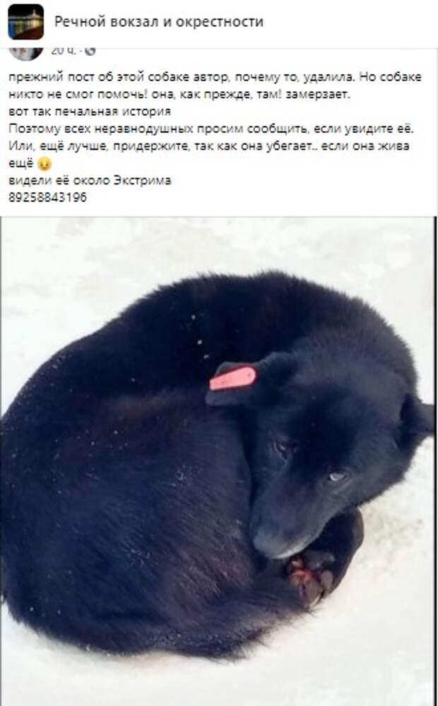 Жители решили судьбу бродячей собаки со Смольной