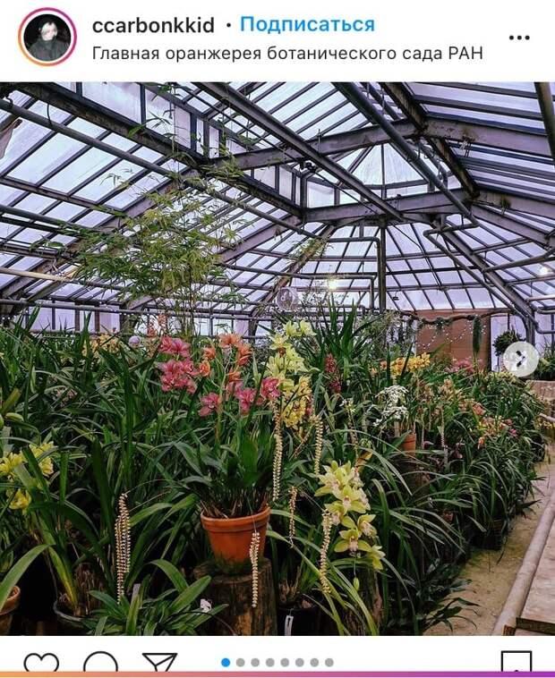 Фото дня: в оранжерее Ботанического сада распустились цветы