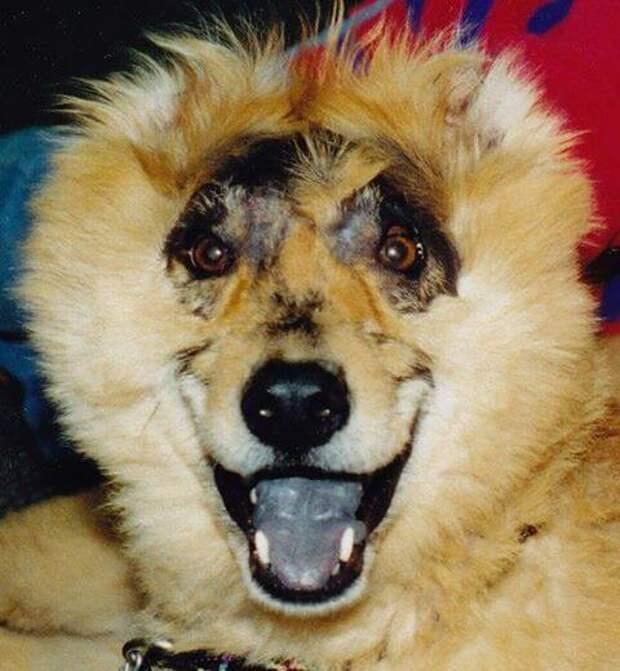 Этот щенок перенес ужасное насилие, но выжил и вместе со своим владельцем изменил мир!