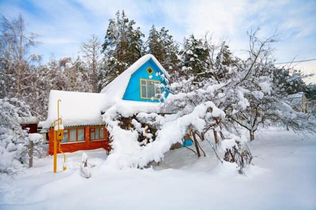 Вымерзли ли наши растения в саду после этих морозов?
