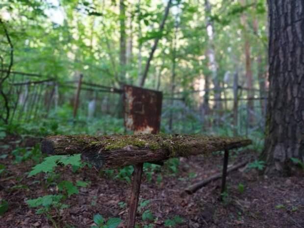 Кладбища Ижевcка начали обрабатывать от клещей и мышей