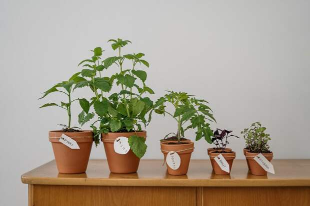 Самая полезная зелень, которую можно вырастить дома