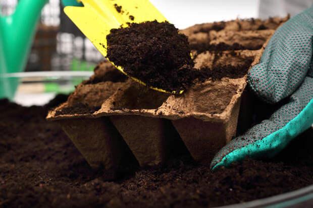 Для выращивания рассады огурцов необходимо использовать рыхлую плодородную почвосмесь