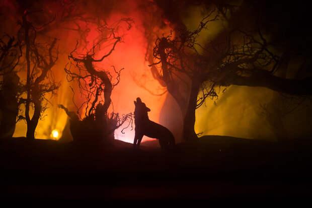 Хозяин бросил пожилого пса, убегая отлесного пожара. Он выжил вогненном аду