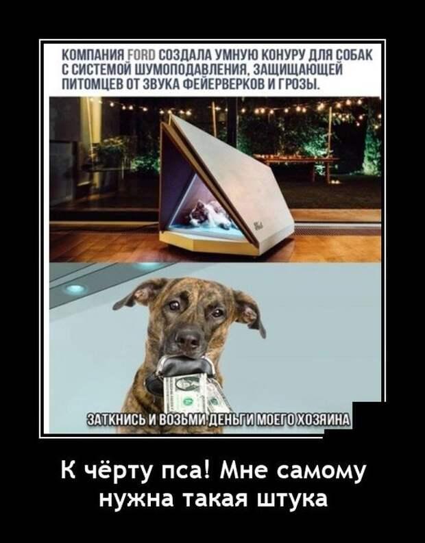 Демотиватор про собаку
