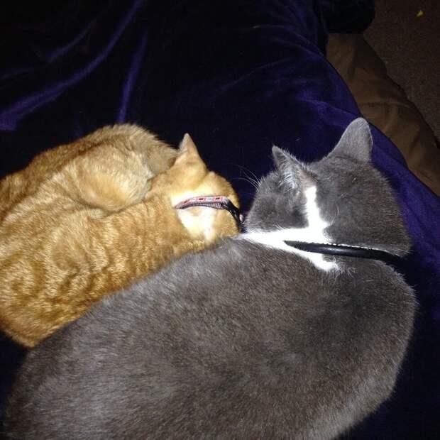 В приюте решили не тратить время на этого кота и записали его на эвтаназию...