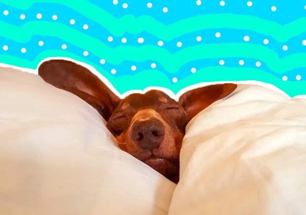 Как улучшить сон, если выпоругались сМорфеем