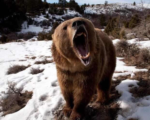 Что помогает от медведей, клещей и недоброжелателей. Делимся опытом.