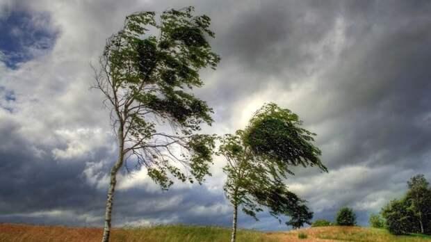 Спасатели предупредили об усилении ветра до 17 м/с в Севастополе