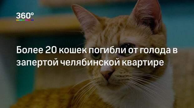Более 20 кошек погибли от голода в запертой челябинской квартире