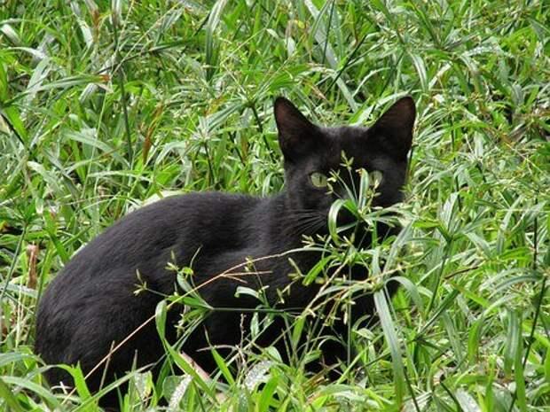 Тринадцатая кошка