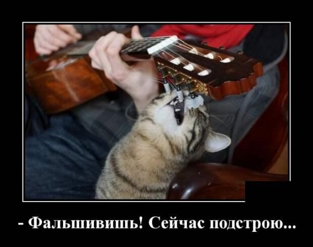 Демотиватор про кота и гитару