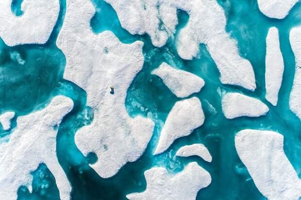 Белые медведи охотятся на дрейфующих льдах. Они могут проходить по ним тысячи километров. Вот почему таяние Арктики в результате изменений климата представляет серьезную угрозу выживанию этого вида © Флориан Леду