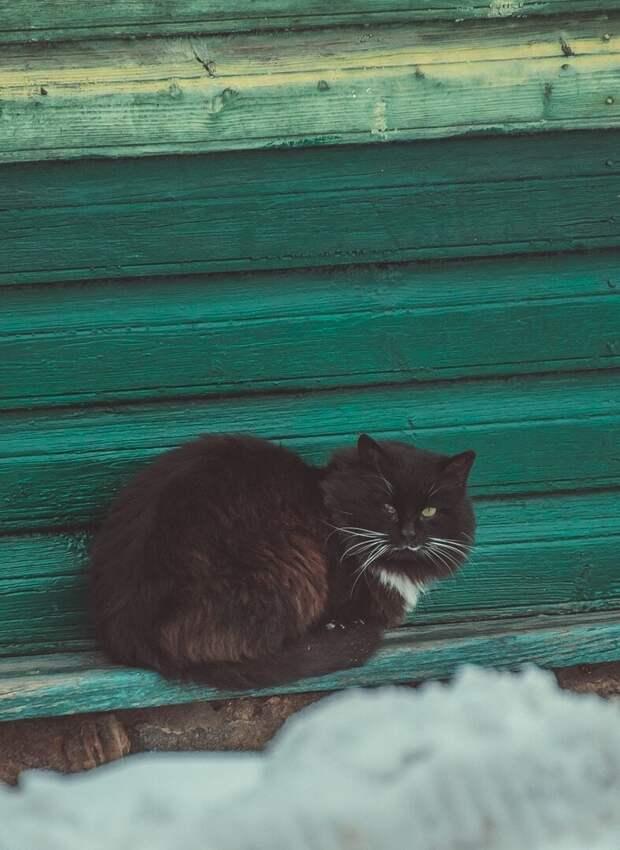 Матёрый Хвостатые, братья наши меньшие, город, кот, кошка, улица, уличные кошки, эстетика