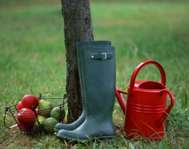 legkovmeste.ru: Полив деревьев осенью