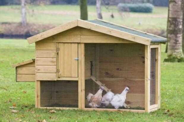 Сколько куриные яйца хранятся в холодильнике