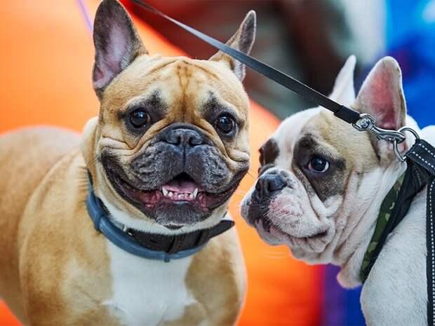 Ветеринары рассказали, как держать питомцев в форме
